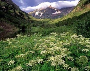 maroon-bells-white-river-national-forest-colorado