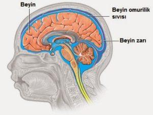 beyin-omurilik-sivisi